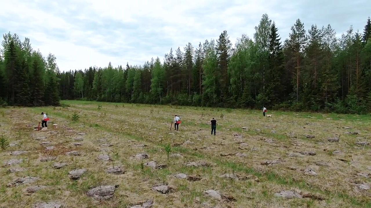 Taimiteko, taimien istutus alue Hankasalmella.