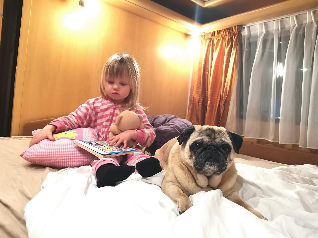 Tyttö ja mopsi asuntovaunun sängyllä.