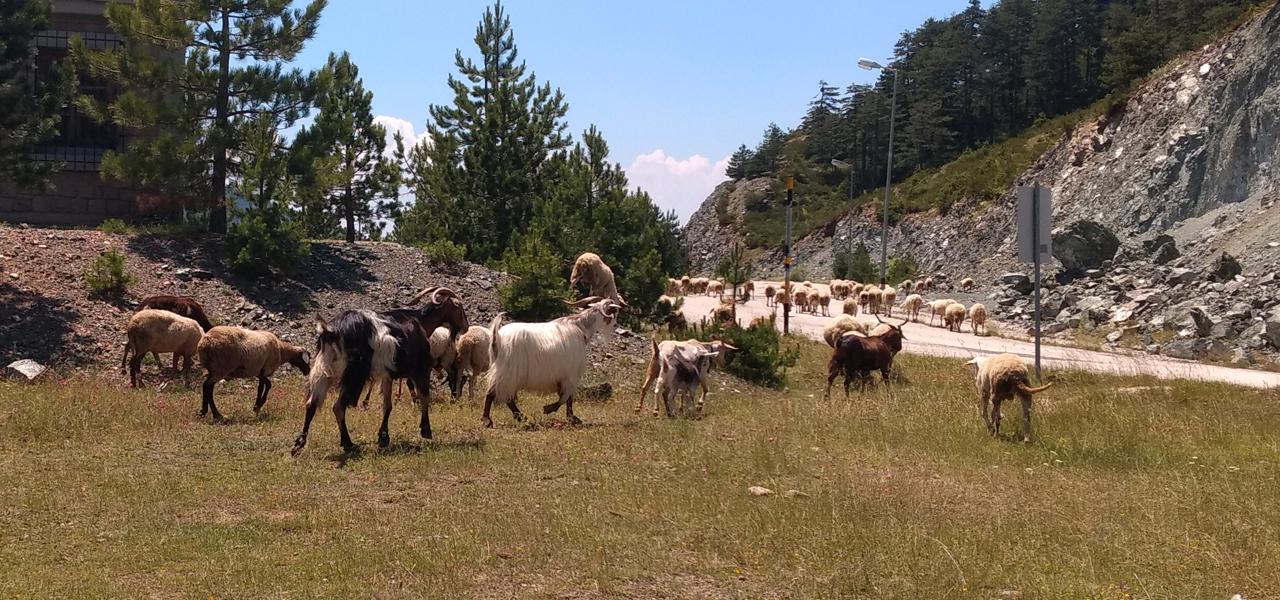 Viisi asiaa, jotka opin ajamisesta Balkanilla