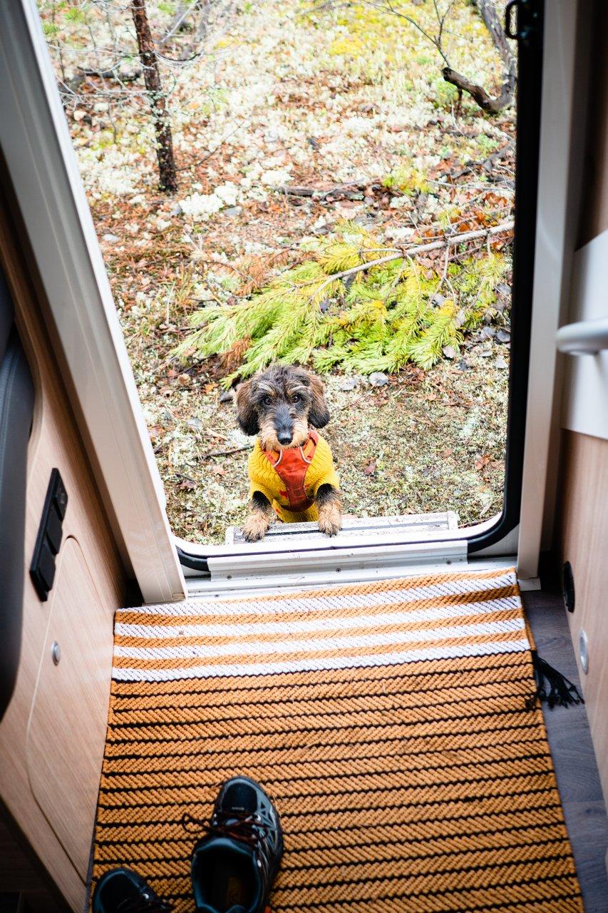 Mauri katselee matkailuauton ovelta sisälle.