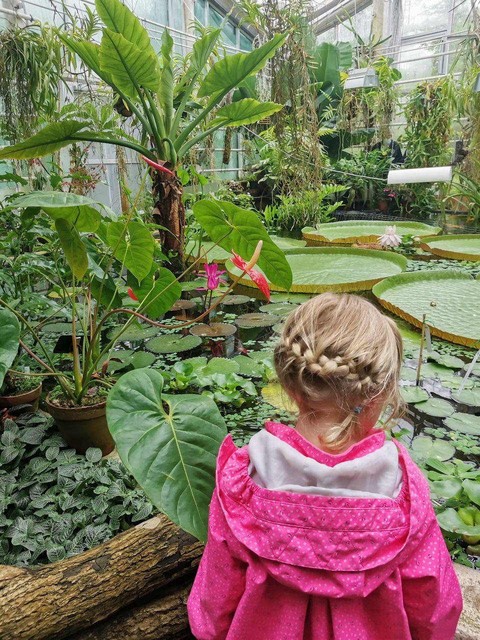 Tyttö katselee jättiläislumpeita kasvitieteellisessä puutarhassa